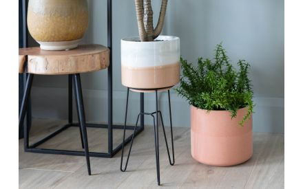 Peach Plant Pot - Coby (Collection Only)